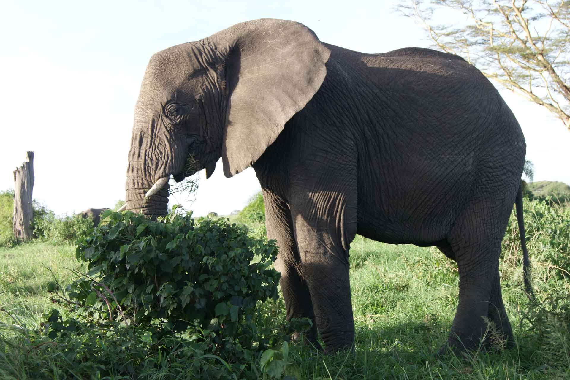 Samora-Explorers-Ltd--2-days-safari