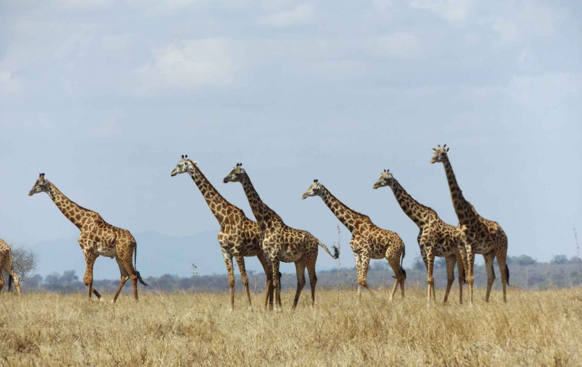 Samora-Explorers-Ltd--4-Days-Safari