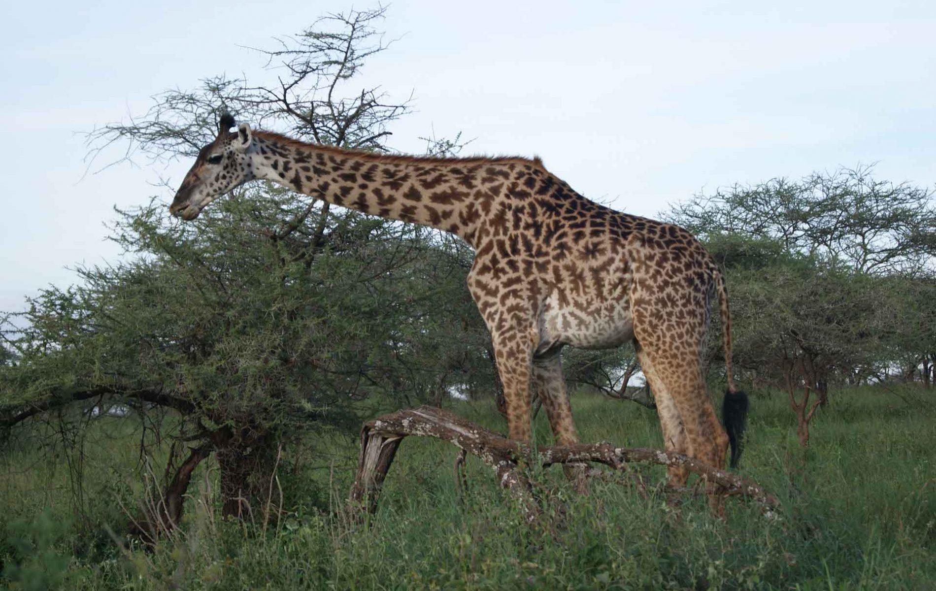 Arusha-Np-with-Samora-Explorers