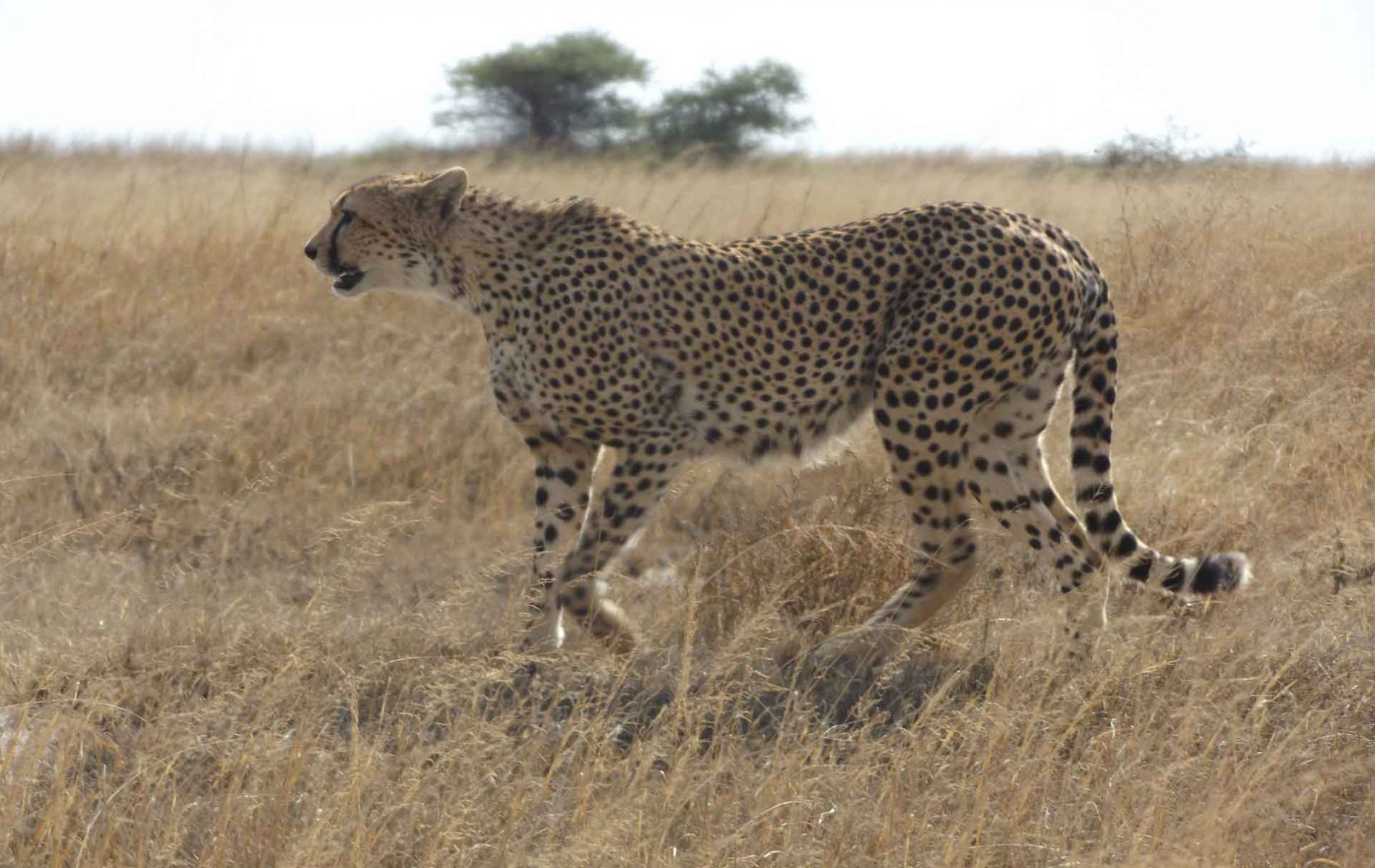 Samora-Explorers--8-Days-Safari