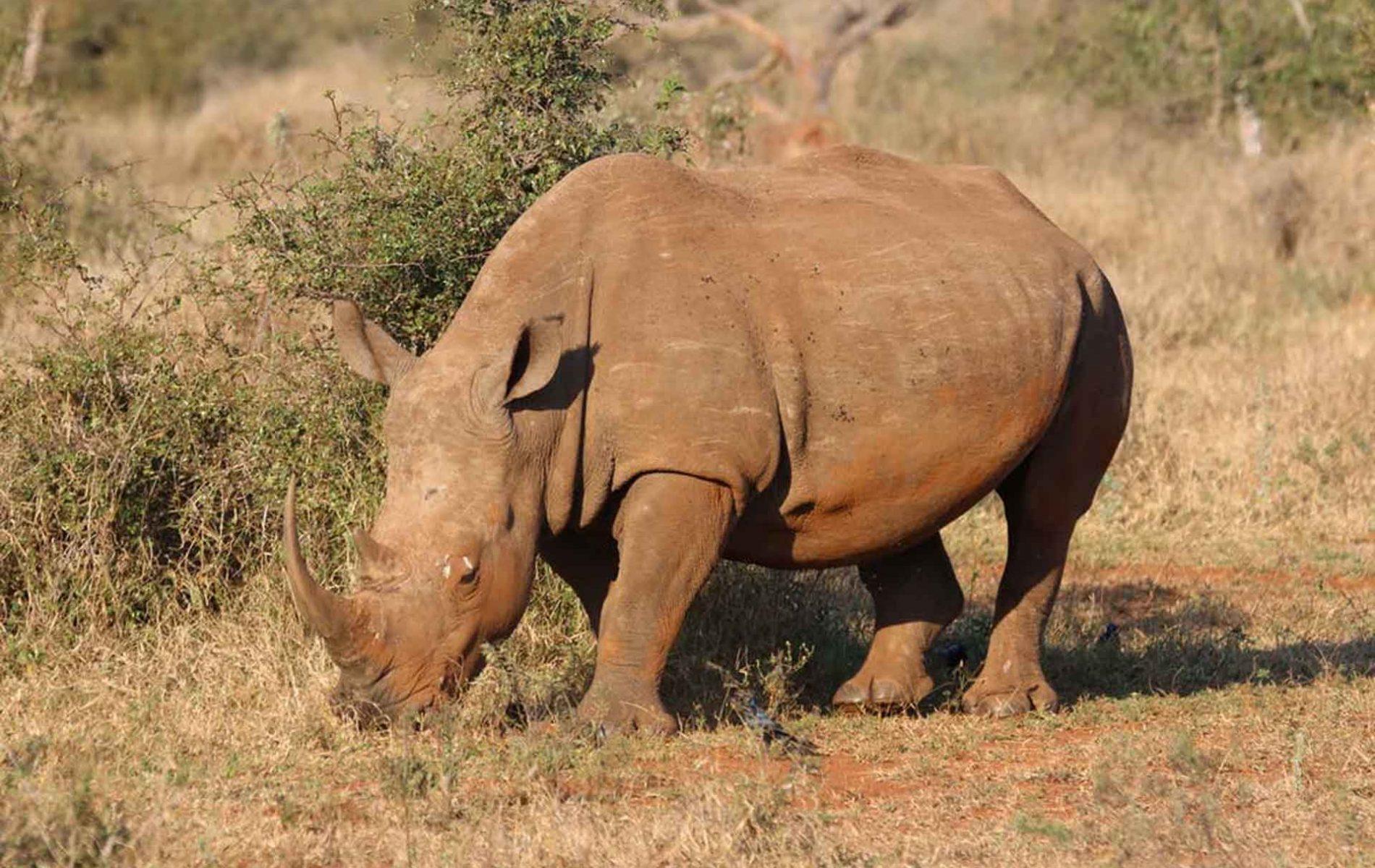 Samora-Explorers-Safaris